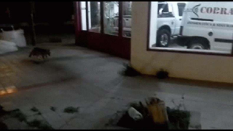 Video de Antonio a tráves del whatsapp de El Patagónico
