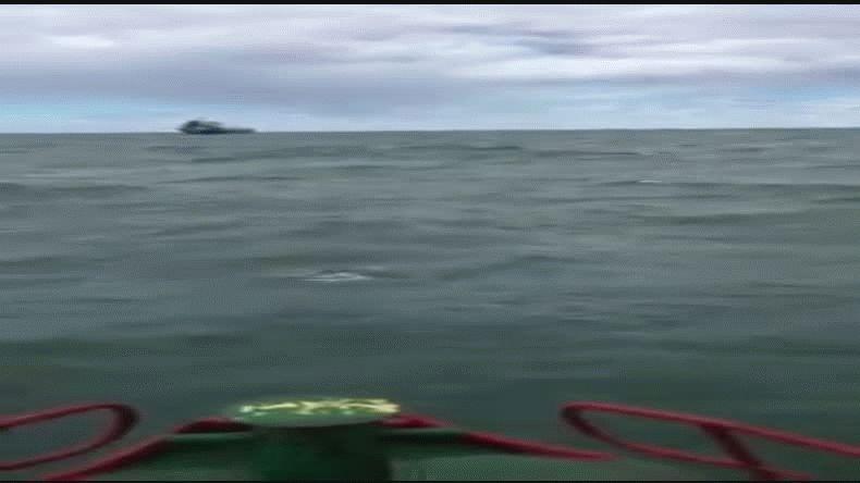 Las toninas overas se dejaron ver en la Costanera de Comodoro